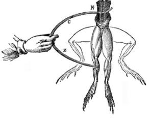 patas de rana