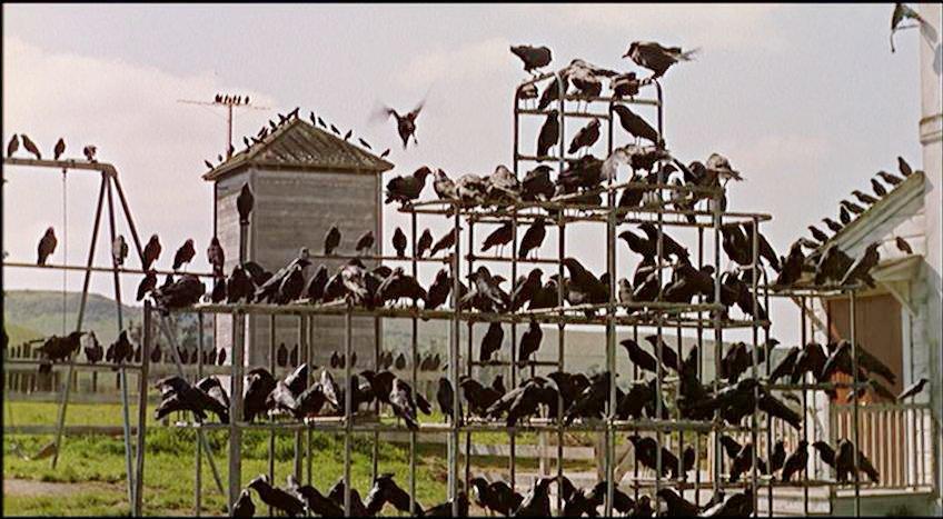 the birds hitchcock