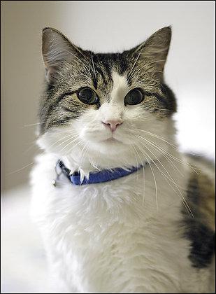 El gato Oscar