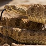 Isla de las serpientes 2